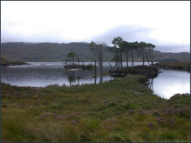 Trout fishing Loch Assynt