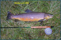 Trout from Weedy Loch 2004