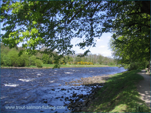 Aberlour Angling Association, River Spey