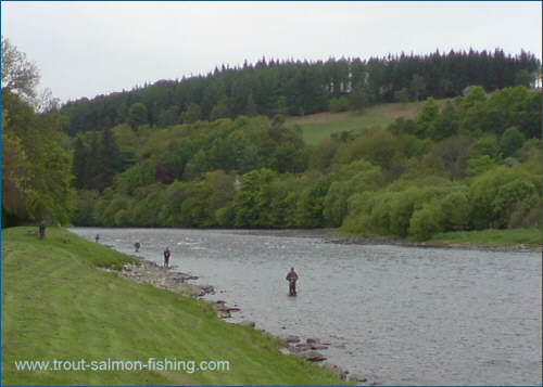 Salmon fly fishing, Aberlour, River Spey