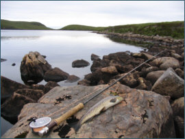 a trout from the Corrie Loch