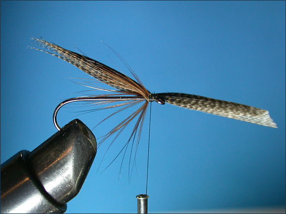Mallard and Silver sea trout fly - mallard wing