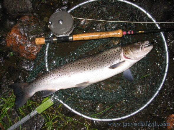 Spey Sea Trout taken on a Needle Tube Fly