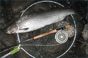 Sea Trout on a Needle Tube Fly