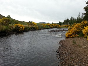 Salmon Fishing River Borgie