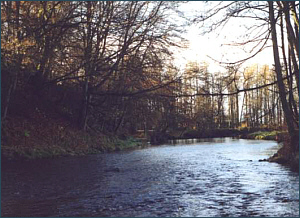 River Endrick Sea Trout Fishing