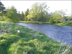 River Teith at Cambusmore