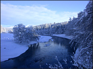 Winter on the Spey