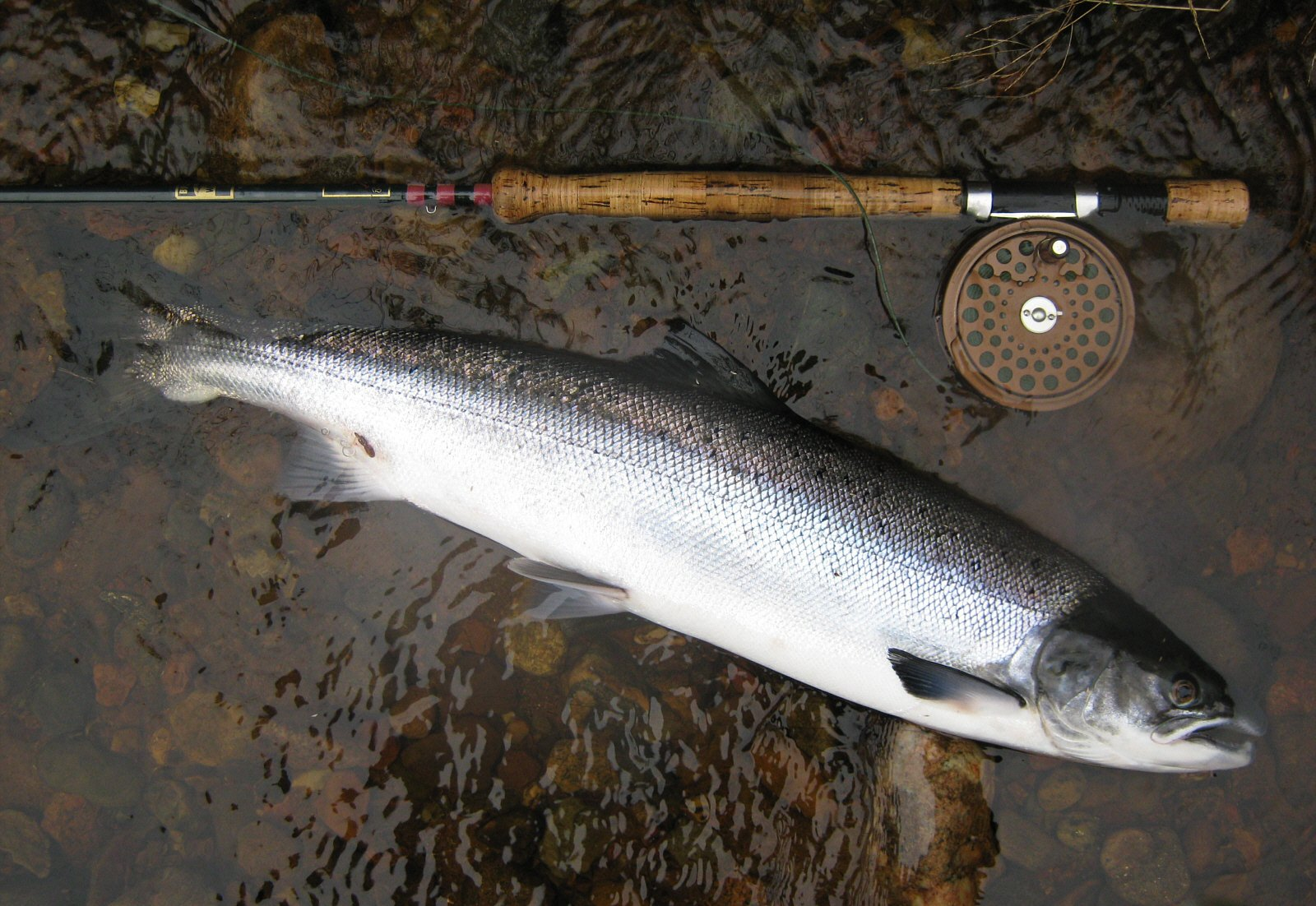 how to fish for salmon in rivers
