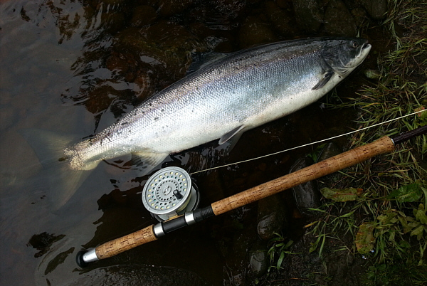South Tyne Salmon Taken on a Needle Tube