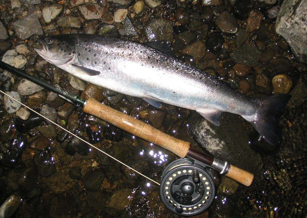 Sea Trout Fishing A Brief Guide