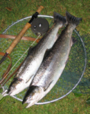 Sea Trout Fishing Tackle
