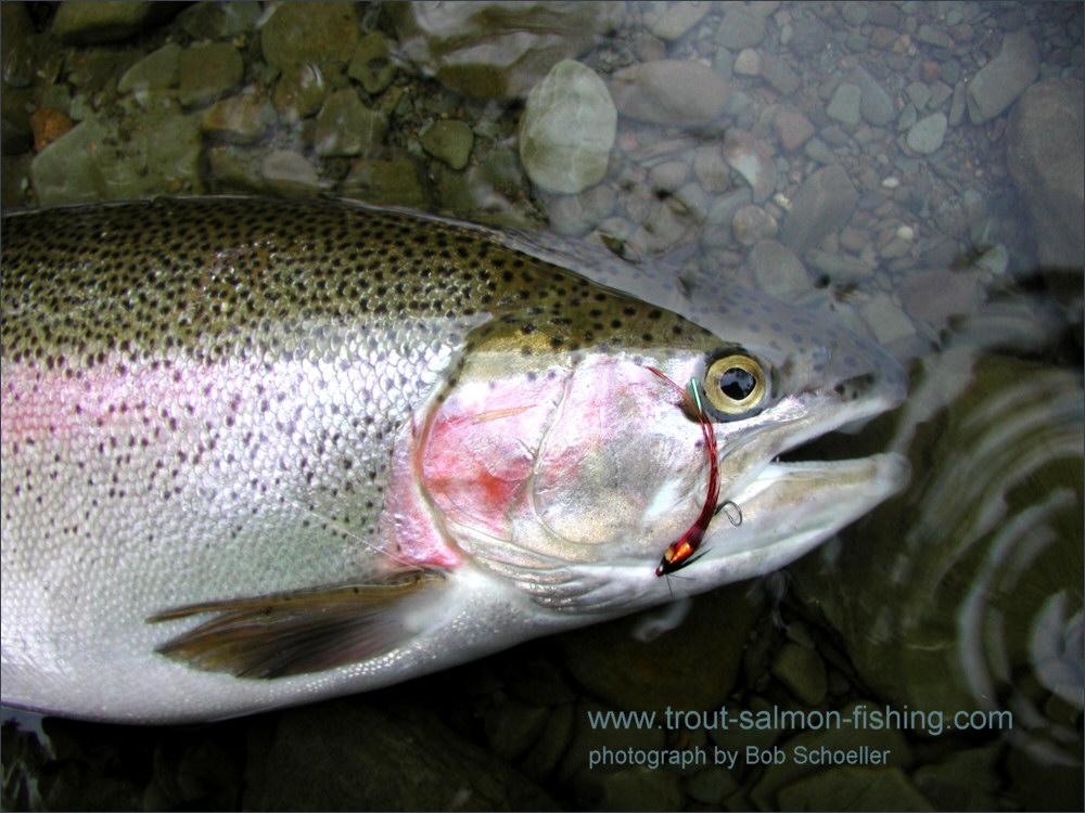 Steelhead needle tube flies for What is steelhead fish
