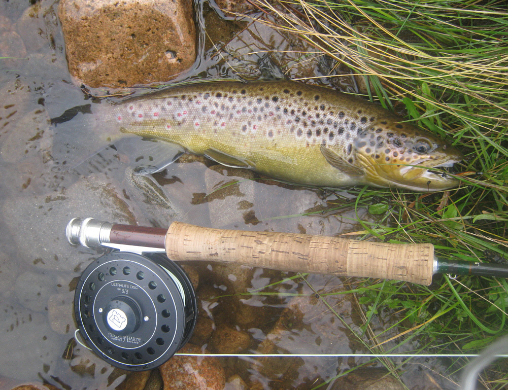 trout fishing photos